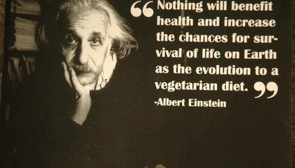Vegan Quotes Best 50 Quotes About Veganism  Jesus Vegans